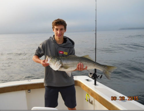 RI Striper Fishing Charter–Aces Wild